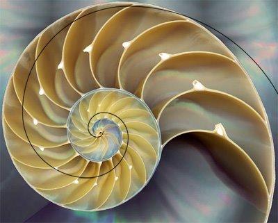 Fibonacci natureza numeros e nautilus
